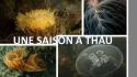 Une Saison à Thau : c'est reparti !
