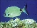 Pêche Sous Marine : stage à Sète