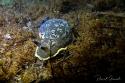 Combio81 - Sortie plongée Découverte de l'Etang de Thau 17-19 Avril 2020