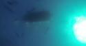 Sortie apnée à Cerbère en mai 2019