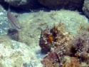 Apnée : sortie exploration sur le sentier sous-marin de Peyrefite