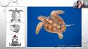 Beau succès pour la 1ère visioconférence bio sur les Tortues marines !