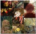 Calendrier 2018 de la commission environnement et biologie