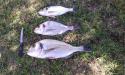 Pêche sous-marine - Découverte des Aresquiers