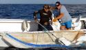Conf CDEBS31 : Requins, Profilage Génétique