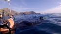 Sortie mer en apnée, et validation de niveaux